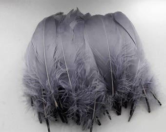 set of 5 feathers gray 15-20cm