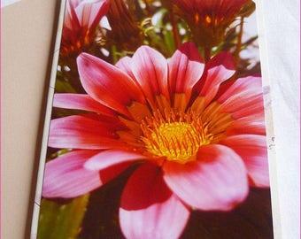 """Double 10 5x15cm made from photos of a Gazania flower """"Sun rose garden"""""""