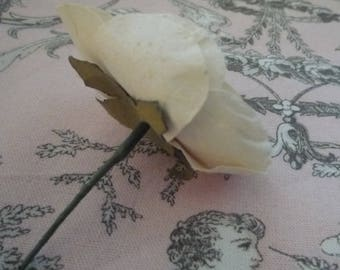Small white rose and its green leaf