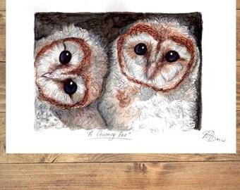 Barn owl twins A4 print