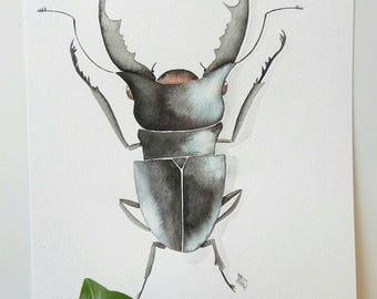 Bug n. 3