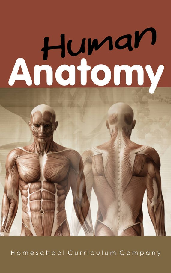 Homeschool Curriculum Science Human Anatomy Homeschool