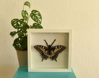 Diervriendelijk - ingelijste Koninginnenpage|Papilio machaon. Handgemaakte vlinder voor in je interieur