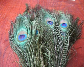 50 natural peacock feathers (PROMO)