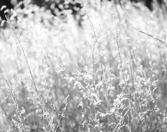 Black and White Photo of Grass in the Sun III  //  Nature Photography in Austin, Texas