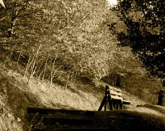 Greetings card - Autumn bench