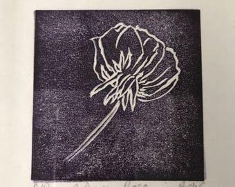 A Dusky Rose