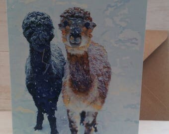 Alpaca card, alpaca greeting card, Alpaca gift, Llama card, Drama llama, Fluffy alpaca, gift for alpaca keeper, alpaca products, alpaca