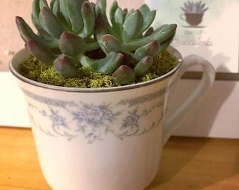 Vintage Teacup with Succulent (Blue Accent Color)