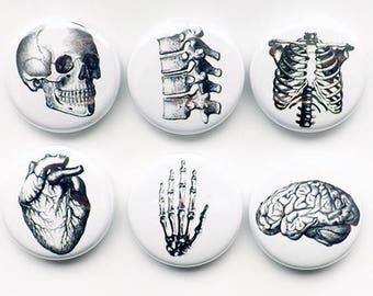 Button Pins Anatomy brain skull anatomical heart med medical student gift stocking stuffer party favor magnet teacher goth nurse doctor grey