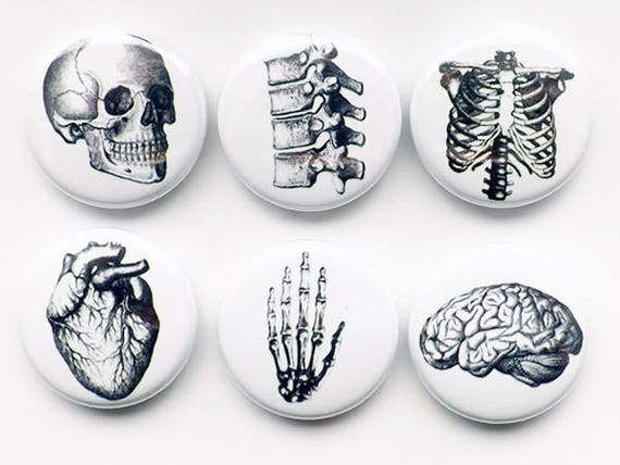 Button Pins Anatomy brain skull anatomical heart med medical student gift stocking stuffer party favor magnet teacher goth nurse doctor grey