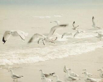 Seagulls; lake art, beach art, coastal art, fine art photography, wall art, by F2images