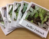 Succulents Plants Gift Cards Set of Six 6 Notes Office Teacher Coworker Thank You Blank Gardening Gardener Friendship Hello Unisex Friend