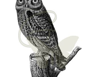 Digital Bird Owl Drawing Download Old Artwork Illustration Crafting Clip Art Transfer