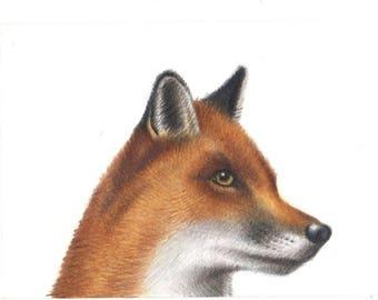 ACEO Fox Wildlife, Original Pencil Drawing, Art Card, Small Art, Nature, Animal Lover Gift,