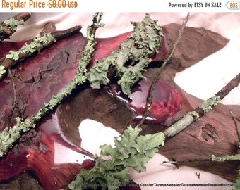 Save25% Larger Lichen Tree Branch-Lichens-5 pieces of Wild Leafy Lichens on larger  and longer branches plus a larger section of lic...