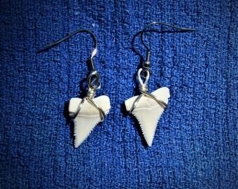 Modern Great White shark tooth earrings