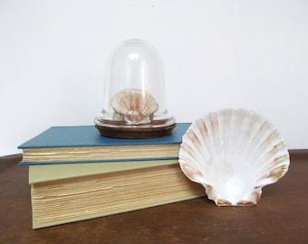 Vintage Bell Jar, Little Glass Cloche, Curiosity Display