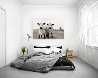 RESERVED DISCOUNTED Custom Listing for 30x30 inch square photo of The Twins Two White Calves Photography of Two White Cows