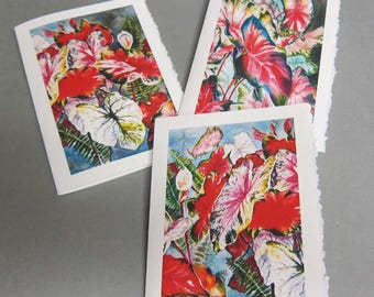 3 Caladium Variety 5 x 7 Note card Blank Greeting Card Vertical Images Caladium bulbs Flowers