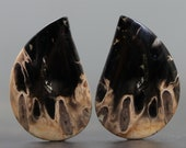 Petrified Palm Wood Root Fossil Pair (21622)