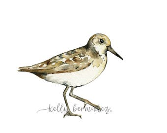 Sand Piper Watercolor, Wall Art, Bird Art, Beach Art, Print