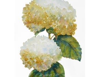 White Hydrangeas original watercolor vignette painting, 11x14 impressionist flower wall art, Country cottage home decor by Janet Zeh