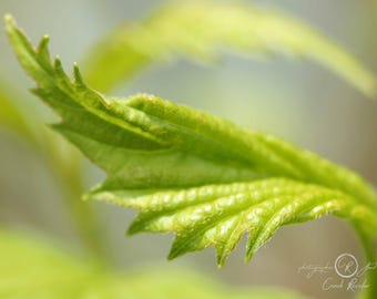 Photography, Photo, Blooming Leaf, Fine Art, Woodland, Botanical, Forest, Trees, Leaves, Rustic Decor, Housewarming Gift, Unique Gift, Gift