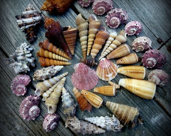 Seashells, Drilled, Beach, Craft Supplies, Nautical, Jewelry, Photo Props, Summer, Aquariums