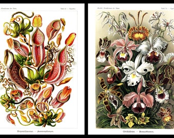 Ernst Haeckel's Vintage Artwork Angiospermae Set