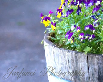 Pot of Pansies