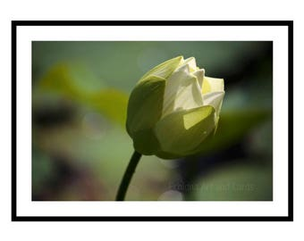 Large Flower Wall Art, Lotus Print, Zen Room Decor, Calming Art, Floral Photography, Gift for Yogi