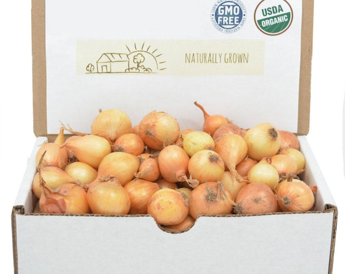Yellow Onion Sets Organic   Stuttgarter Onion Bulbs 1 Pound - Non-GMO Spring Shipping
