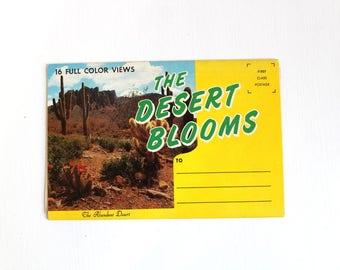 Desert Blooms Folder, Souvenir Folder, Vintage Postcard Book, Desert Blooms Postcards, Desert Postcard Book, Succulent Plants Postcards