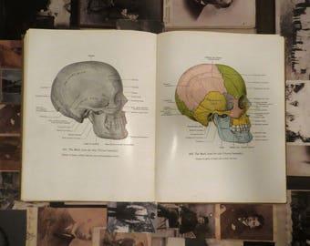 Vintage Atlas of Anatomy book third edition 1951