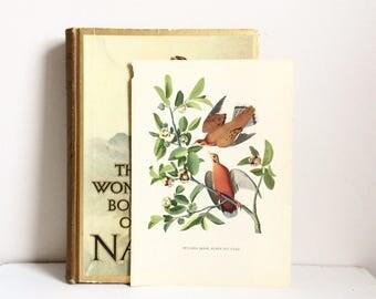 Vintage bird art bookplate bird ephemera naturalist decor