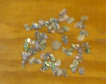 75 Polished Abalone Pieces