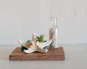 Seashell Planter, Shell Planter, Air Plant Planter, Shell Plant Holder, Air Plant Terrarium, Office Decor, Gift for Her, Girlfriend Gift