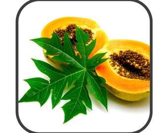 Papaya Leaf - Carica papaya