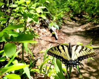 Butterfly and Nature Photography