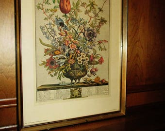 February Twelve Months of Flowers Print  by Robert Furber 1964
