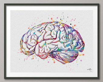 Brain Anatomy Watercolor Print Medical Art Science Art Graduation Gift Anatomy Neurology Human Brain Nurse Science Poster Psychological-972
