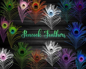Commercial use clipart and graphics by originsdigitalcurio for Where can i buy peacock feathers craft store