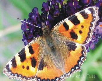 """Lovely Small Tortoiseshell Butterfly Insect Flowers design c large 20cm/8"""" ceramic tile kitchen bathroom living room walls splash backs"""
