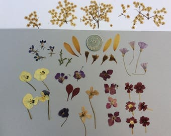 Real pressed flowers,mix,resine,jewellry,scrapbooking,craft supplies