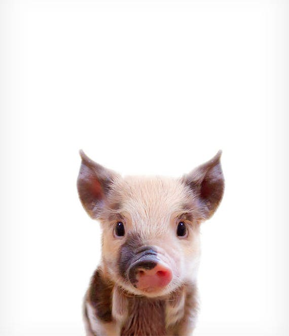 Baby Pig Print The Crown Prints Woodland Animal Nursery