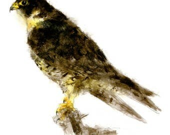 Peregrine watercolor painting - bird watercolor painting - 5x7 inch print - 0145