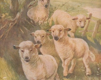 Sheep with Baby Lamb Flock in Meadow Farm Animals Color Antique Art Print 1909 by A. E. Kennedy