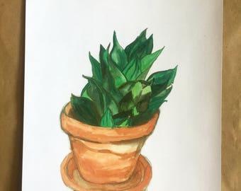 Jade Sansevierias in Terra Cotta