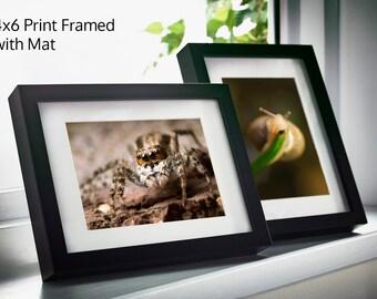Jumping Spider Print, Nature Photography, Spider Art, Spider Gift, Entomologist gift, Nature Print, phidippus, Entomology Gift, arachnida
